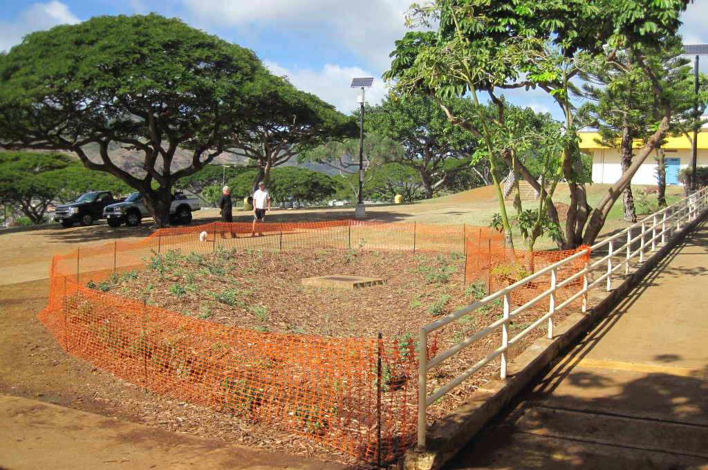 Kaiser Rain Garden AFTER Photo MalamaMaunalua 10.30.11